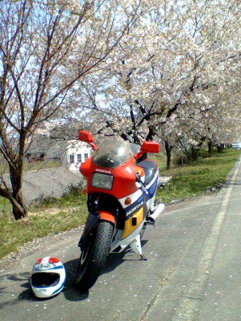 禍々しい桜