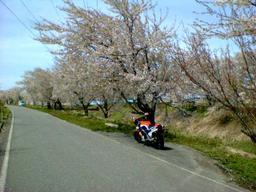 Ns400r_06_sakura_4