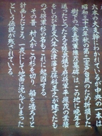 Shogun_sugi_09